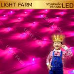 ไฟตาข่าย LED สีชมพู ขนาดเล็ก 1.5 x 1.5 m.