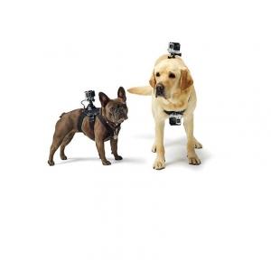 Gopro สายรัดกล้อง กับสัตว์เลี้ยง