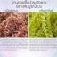 พร้อมส่ง ครีมเดียวที่รวบรวมส่วนผสมล้ำค่าkiss luxury abalone cream thumbnail 11