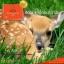 พร้อมส่ง Deerparcental 50000พละกำลังไม่สิ้นสุด thumbnail 4