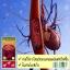 พร้อมส่ง Maxi Organic Red Grape Seed 30000 mgมีOPC สูง ถึง 280 thumbnail 8