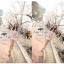 ( พร้อมส่ง) มินิเดรสลุคหรูหราแบบสาวหวาน เนื้อผ้าลูกไม้ทอลาย ดีเทลพิมพ์ลายดอกไม้สีสันสดใสบนเนื้อผ้าที่เป็นลูกไม้ แขนสามส่วน เน้นซิลลูเอทเป็นทรงสวยมากค่ะ มีซับในในตัว thumbnail 5