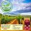 พร้อมส่ง Maxi Organic Red Grape Seed 30000 mgมีOPC สูง ถึง 280 thumbnail 5