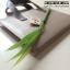 ปากกาต้นหญ้า (Grass pen) thumbnail 1