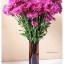 Plum Glass Vase แจกันแก้วทรงกระบอก ปากแหลม สีม่วงอมแดง thumbnail 6