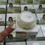 Ruang Khao Cream ครีมรวงข้าว by ตั๊ก ลีลา ประโยชน์ข้าวหอมมะลิไทย เพื่อผิวใสเป็นธรรมชาติ thumbnail 14
