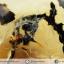 เดนไดทริก อาเกต Dendritic Agateขัดมันจากมาดากัสการ์ (55g) thumbnail 3
