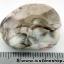 ▽บอสวาน่า อาเกต (Botswana Agate) ขัดมันขนาดพกพา (7g) thumbnail 3