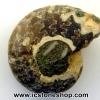▽ฟอสซิล แอมโมไนต์เหลือบรุ้ง(Ammonite) (2.8g)