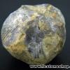 หอยโบราณเป็นหิน (ใบพัด)จากประเทศจีน (12g)