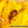 ▽อำพัน บอลติกขัดมันมีแมลงภายใน Genuine Baltic Amber (2.525ct.)