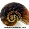 ▽ฟอสซิล แอมโมไนต์(Ammonite) ผ่าครึ่ง(4g)