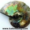 ▽ฟอสซิล แอมโมไนต์เหลือบรุ้ง(Ammonite) A+ ผ่าครึ่ง(4g)