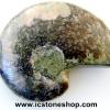 ▽ฟอสซิล แอมโมไนต์เหลือบรุ้ง(Ammonite) (3.6g)