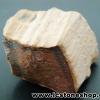▽ไม้กลายเป็นหิน Petrified Wood (13.2g)