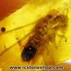 ▽อำพันโดมินิกัน มีแมลงภายใน Dominican Blue Amber ของแท้(2.92ct)