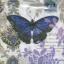 กระดาษแนปกิ้น เดคูพาจ 7727 butterfly and flower thumbnail 1