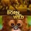 IMAX: Born To Be Wild - มหัศจรรย์ชีวิตป่า thumbnail 1